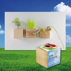 Različna embalaža Rastlinica v lesenem lončku – magnet