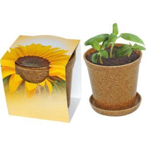 Flower pots, box, trough Mini sunflower in biodegradable pot