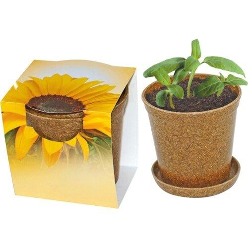 Cvetlični lončki, škatlica, korito Mini sončnica v organskem lončku