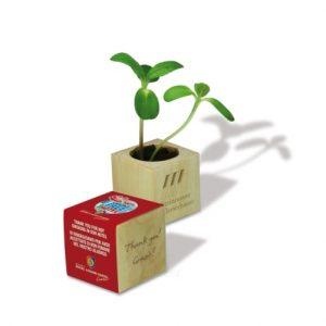 Različna embalaža Rastlina v leseni kocki