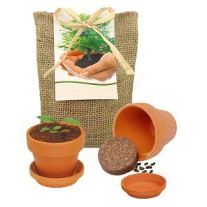 Flower pots, box, trough Robinia tree pot in jute sack