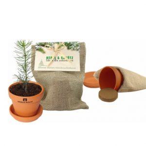 Flower pots, box, trough Christmas tree in jute sack