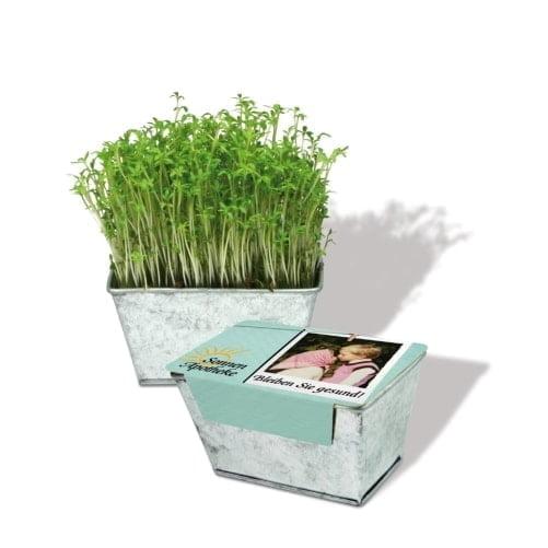 Cvetlični lončki, škatlica, korito Zeliščni vrt