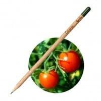 Sprout Svinčnik Češnjevec