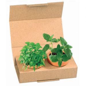 Flower pots, box, trough Veggie Snack Duo
