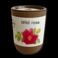 Cvetlični lončki, škatlica, korito Semena v eko lončku