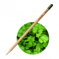 All products Pencil Coriander