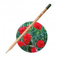 All products Pencil Carnation
