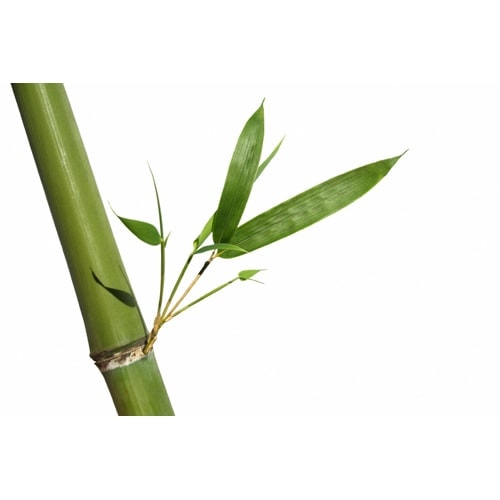 Ekoman USB ključek Bambus