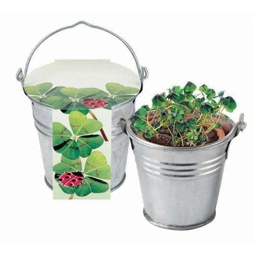 Cvetlični lončki, škatlica, korito 4-peresna deteljica v mini vedru