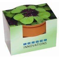 Cvetlični lončki, škatlica, korito 4-peresna deteljica v lončku