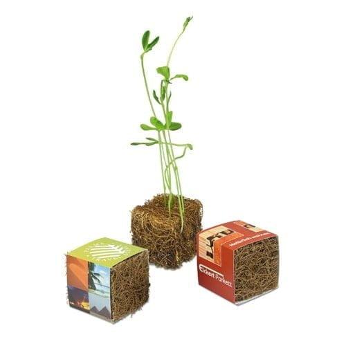 Različna embalaža Rastlinica iz kokosove kocke