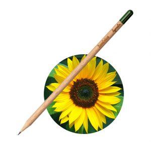 Sprout Svinčnik Sončnica