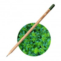 Sprout Svinčnik Timijan