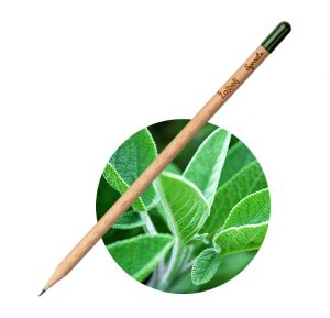 Sprout Svinčnik Žajbelj