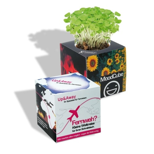 Cvetlični lončki, škatlica, korito Zelena kocka