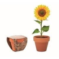 Različna embalaža Glineni lonček s semeni – sončnica